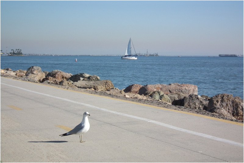seagull at long beach