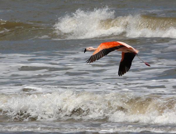 flamenco olas mar orense marianoadearriba