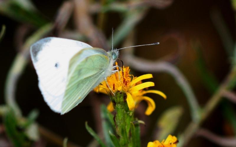 mariposa butterfly macro