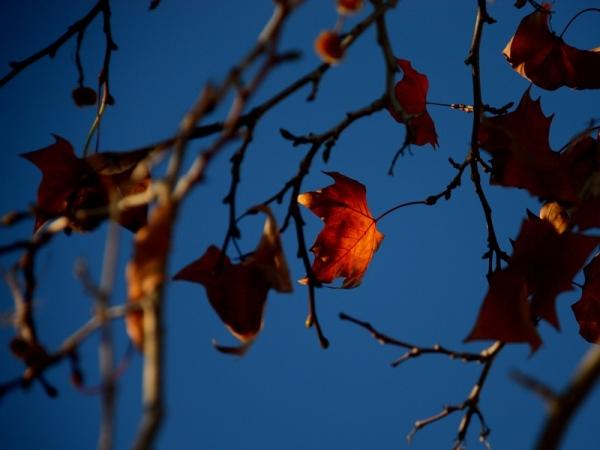 otono hoja leaf autumn