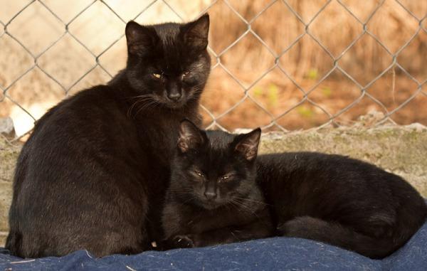 gatópolis gato cat protección animales