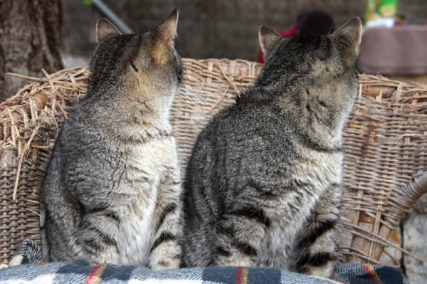 gatópolis gato cat
