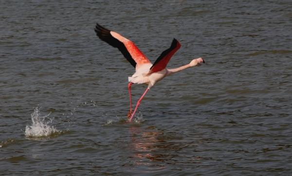 reserva africana sigean flamingo flamenco