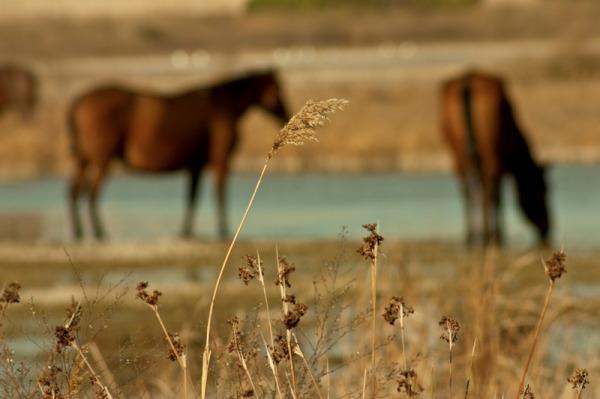 remolar delta llobregat caballo