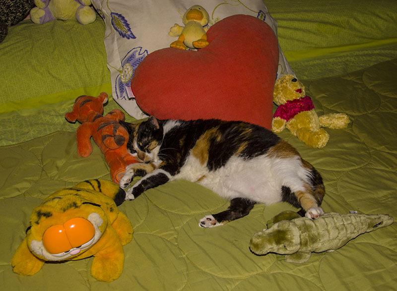 gato cat familia
