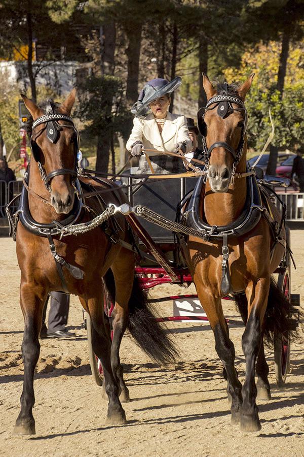 castelldefels concurso caballos