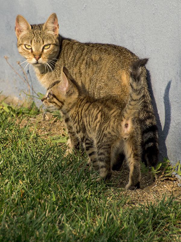 gato cat family
