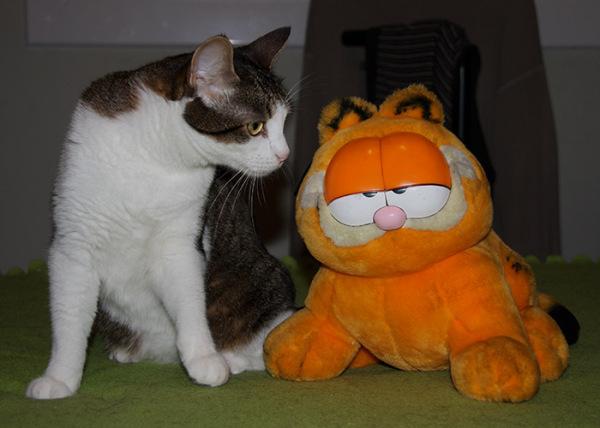 gato cat family sillytuesday