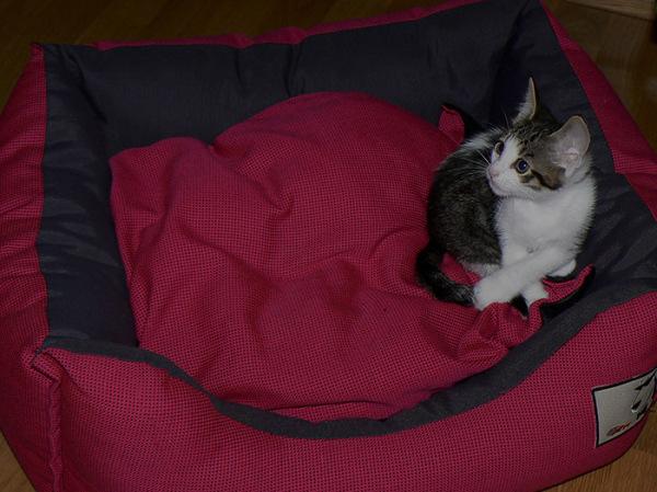 family gato cat sillytuesday