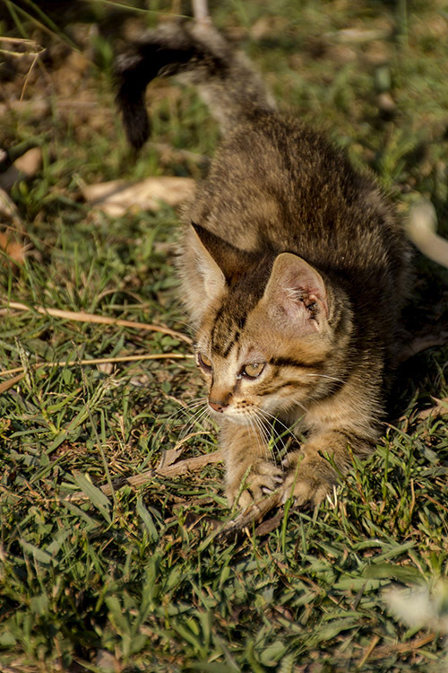 gato cat