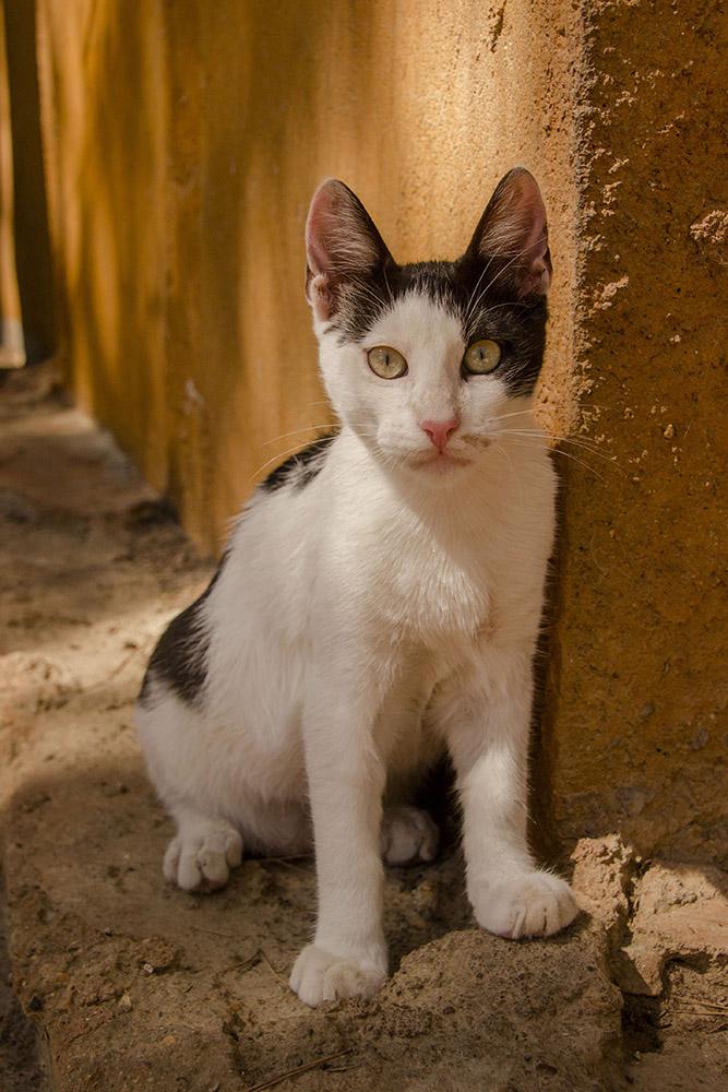 cat gato canopolis