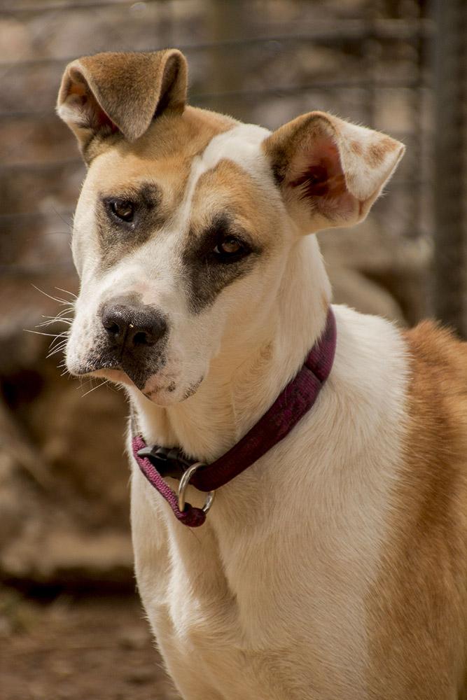 canópolis perro dog