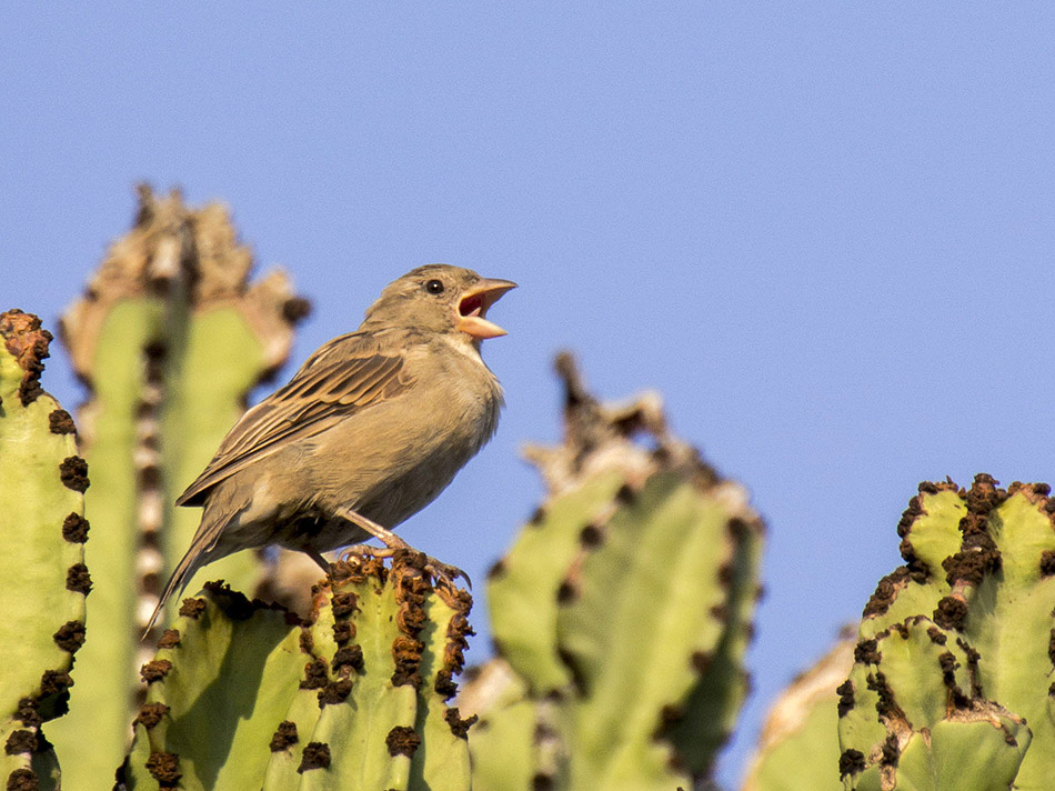 portaventura bird