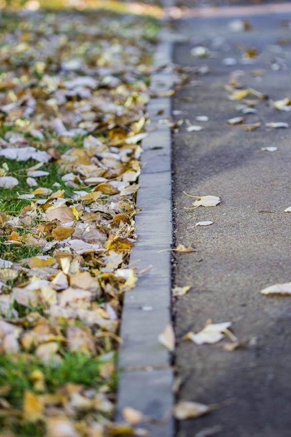 street autumn