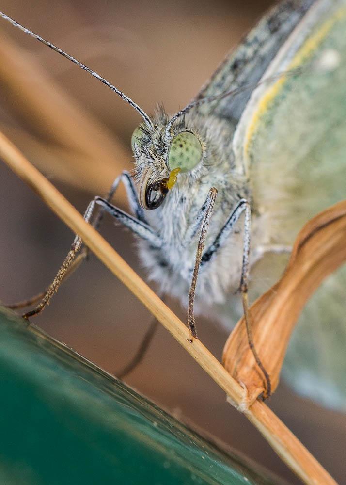 macro mariposa