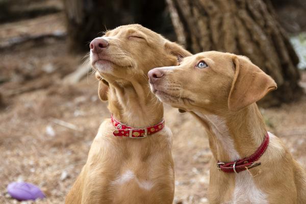 castelldefels canopolis gossos