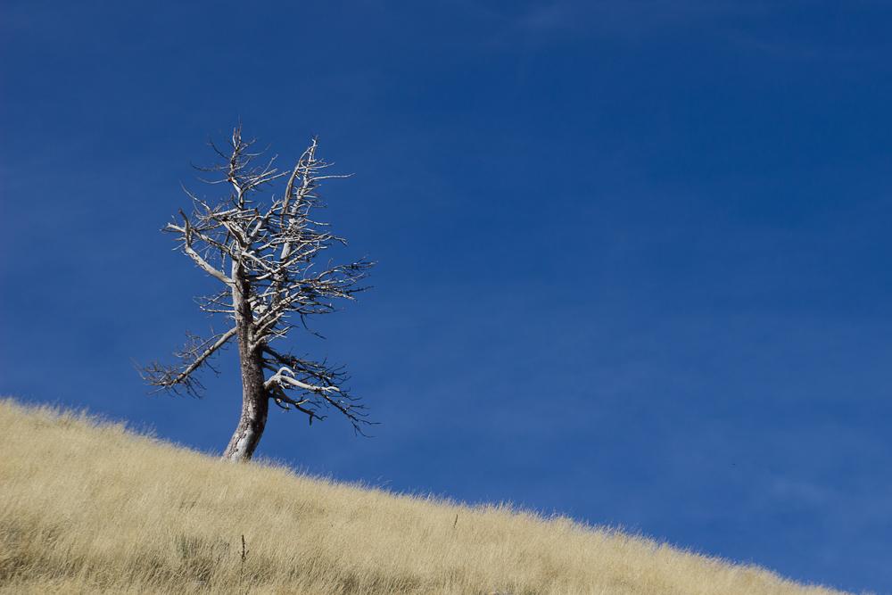 nature landcsape valldenuria