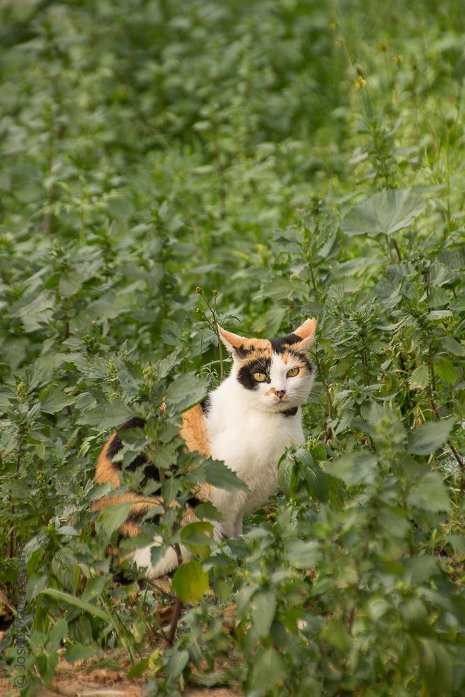 cat wild nature stray