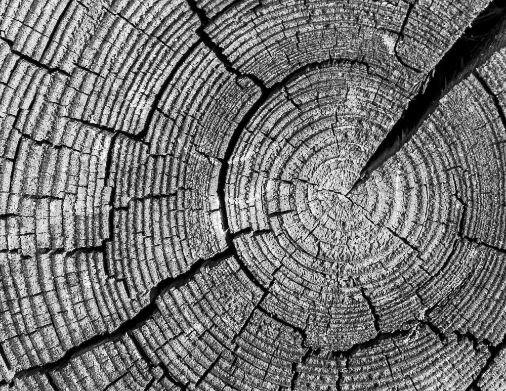 macro tree trunk