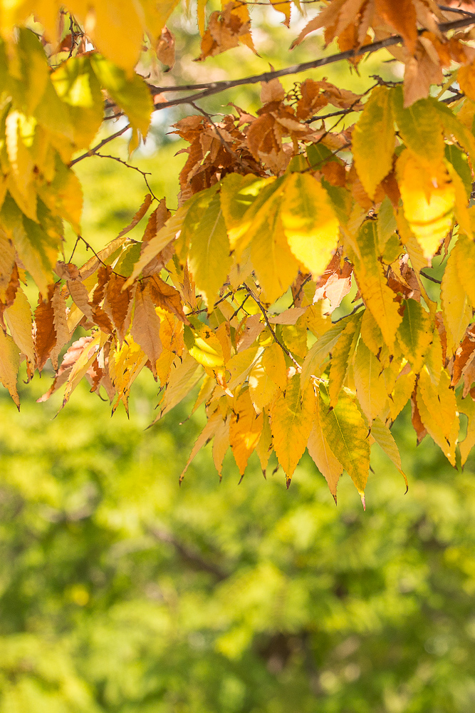 colors plants autumn