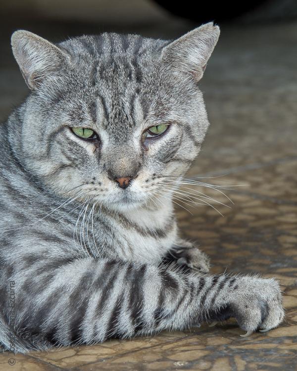 international day cat