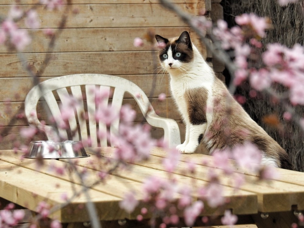 Trifolium Canópolis gato cat