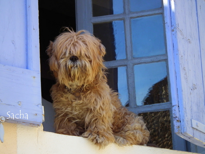 Chien perché sur une fenêtre !!!!Valensole