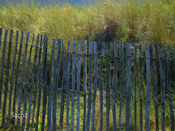 Ganivelles littoral breton