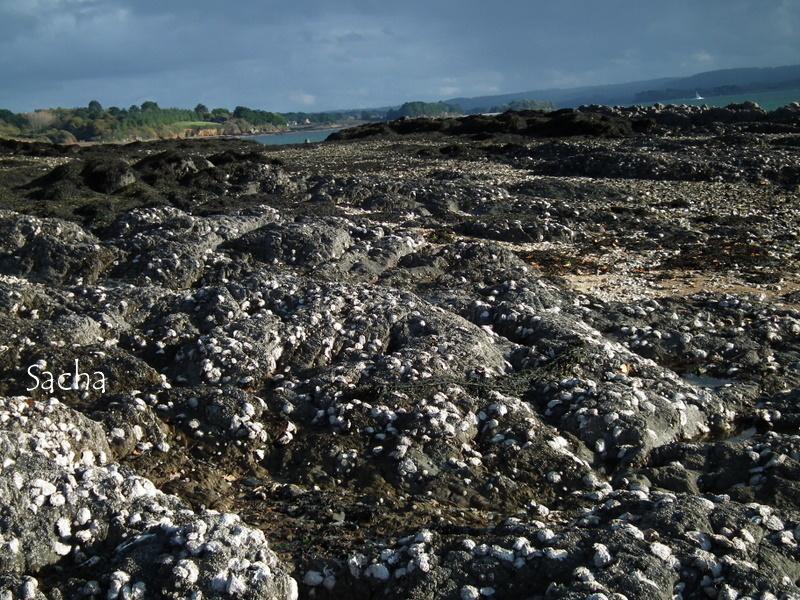 A perte de vue ..des huîtres sauvages ...
