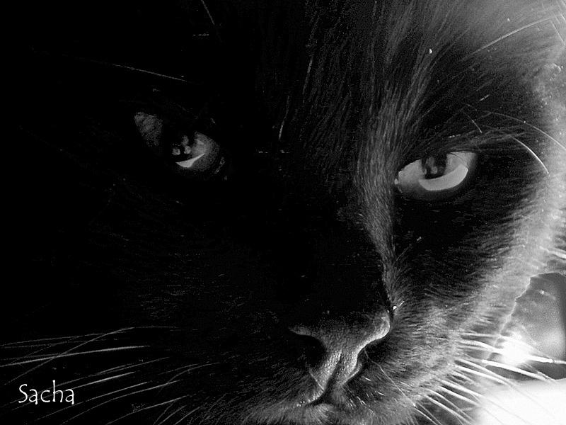 Aristote ...my cat !