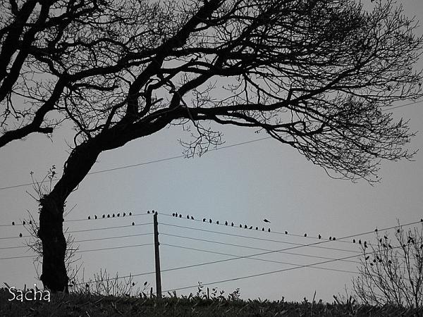 Les oiseaux se rassemblent ...