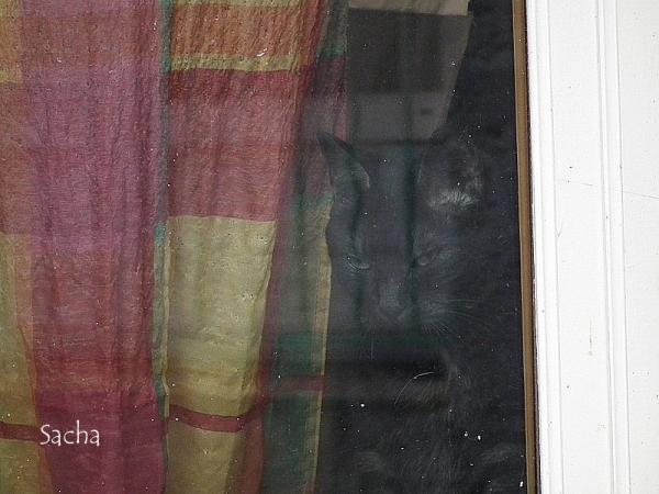 Solitude et tristesse  chat  village de  Sisteron