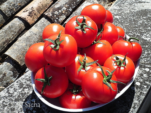 Délicieuses tomates .....