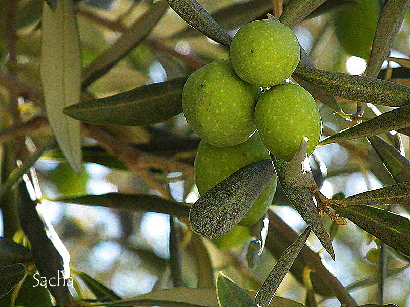 Olives ...