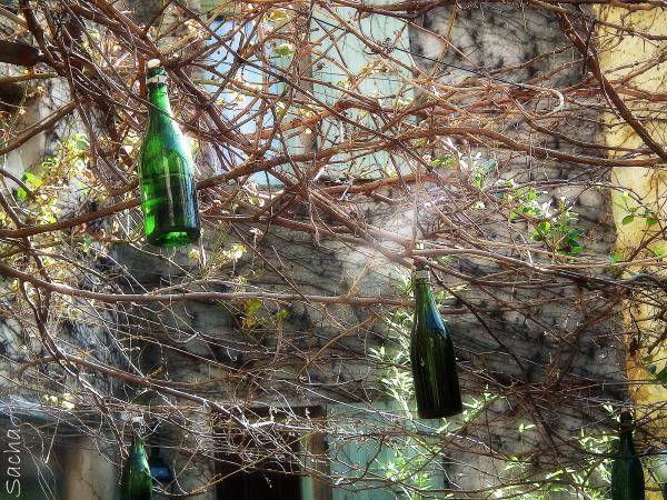 Les bouteilles accrochées aux arbres ,  Saignon