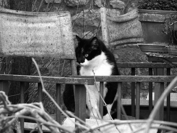 Le chat !