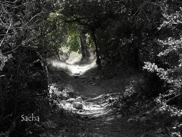 Chemin ombragé plateau de la Sénancole