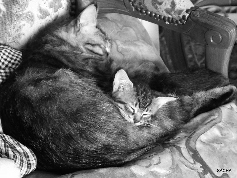 Sacha et son chaton Fifo :)