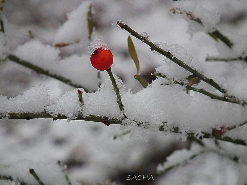 Sous la neige # 2