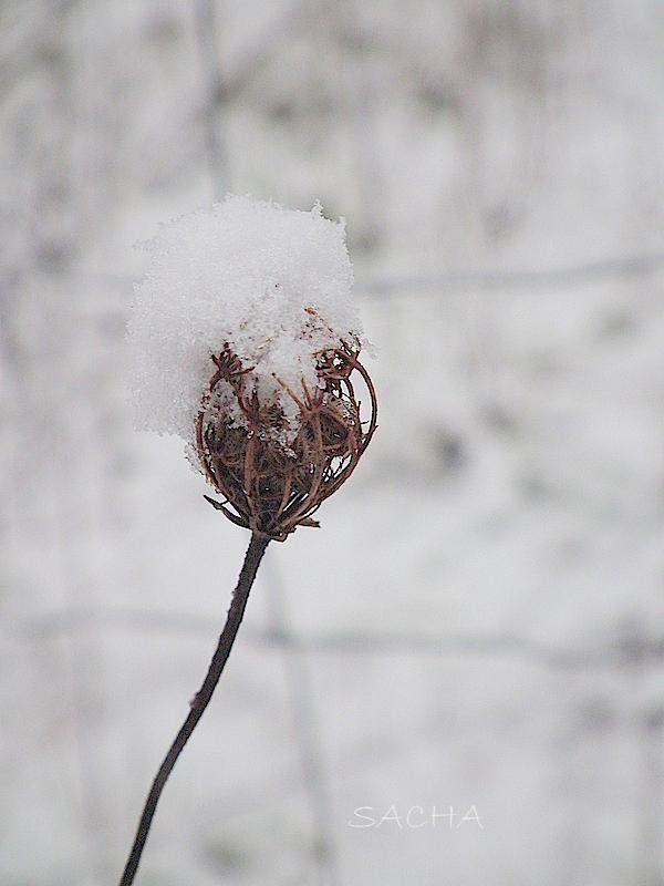 Sous la neige #  5