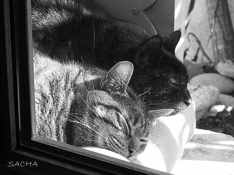 La sieste  d 'Aristote et d'  Hemingway