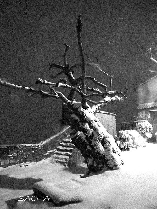 Photographie de nuit : le vieux mûrier