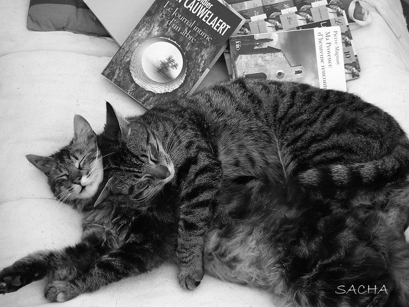 La sieste :) Fanette et son frère Fifo