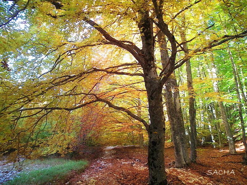 Vallon des Pointes en automne Ventoux