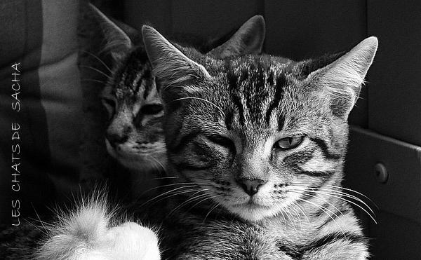 Le chat Fifo :)