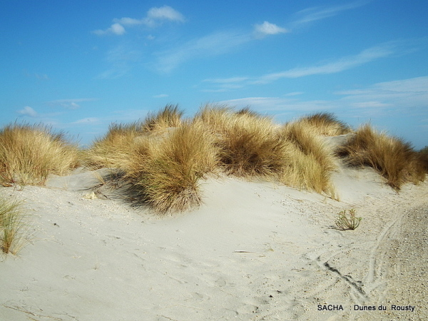 """Dunes de Rousty """"  Digue à la mer """" Camargue"""