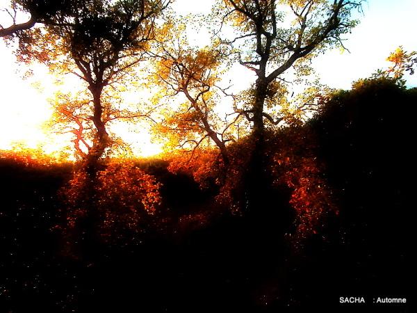 Automne dans les garrigues de Provence