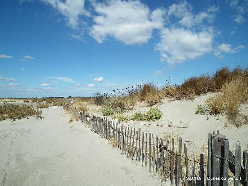 """Dunes  """"Digue à la mer """" Camargue"""