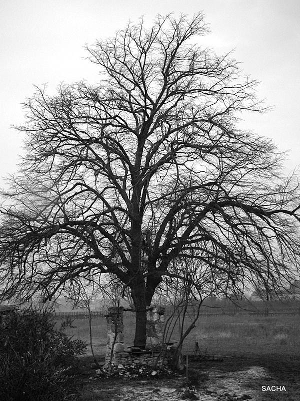 Le vieil arbre et son puits Ménerbes Luberon