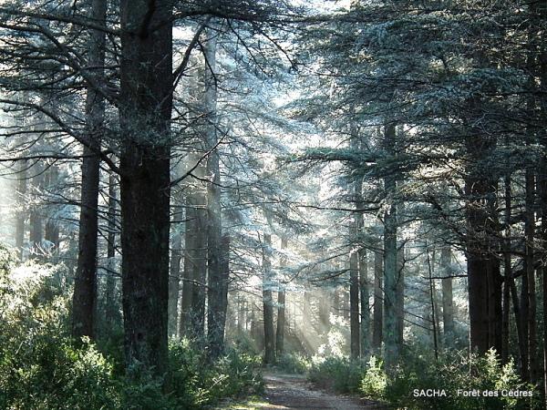 """Forêt des Cèdres """" Massif du Luberon """" face nord"""